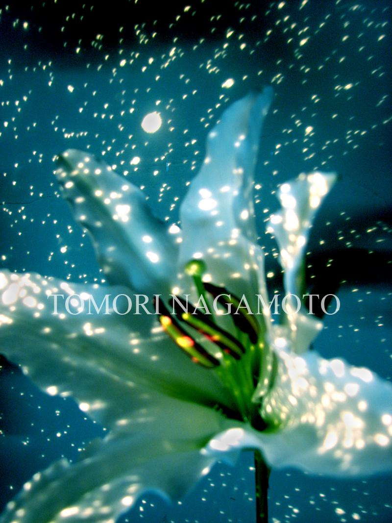 Universe lily
